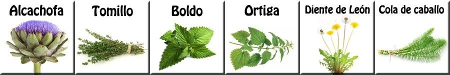 PLANTAS DEPURATIVAS