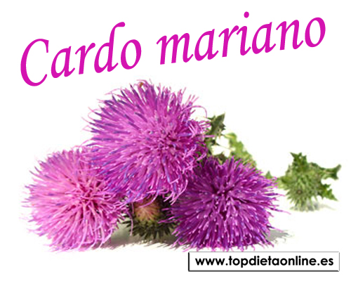 Cardo-mariano-topdietaonline.jpg