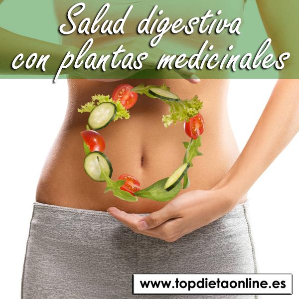 Salud digestiva con plantas medicinales
